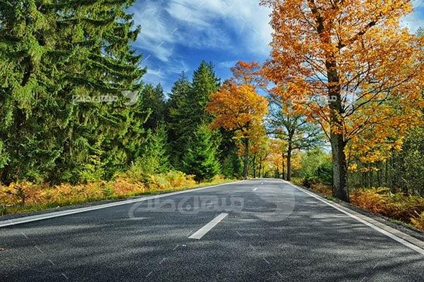 عکس تبلیغاتی طبیعت جاده جنگلی