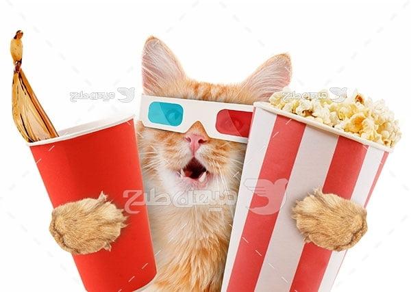 عکس گربه در سینما