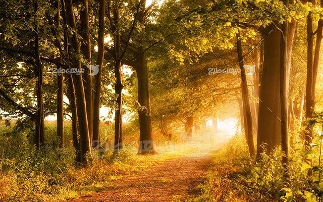 عکس تبلیغاتی طبیعت جنگل زرد