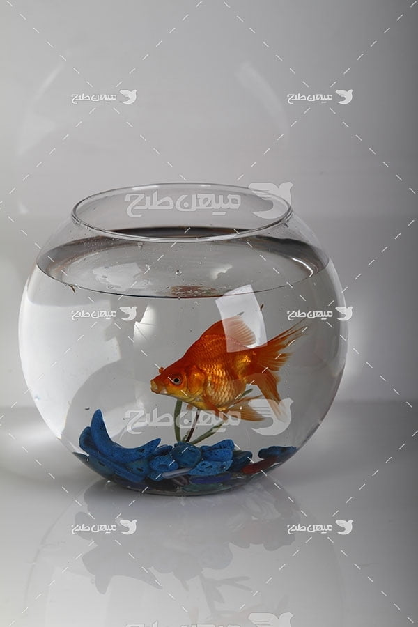 عکس تنگ ماهی