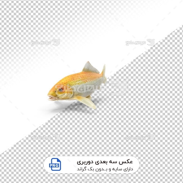 عکس برش خورده سه بعدی کوپر ماهی