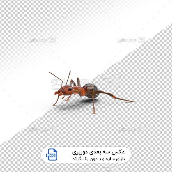عکس برش خورده سه بعدی مورچه قرمز