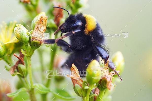 عکس تبلیغاتی زنبور