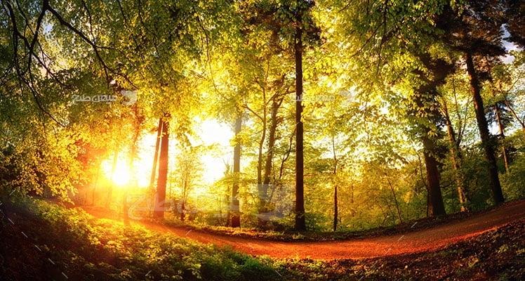 عکس تبلیغاتی طبیعت نور خورشید در پاییز