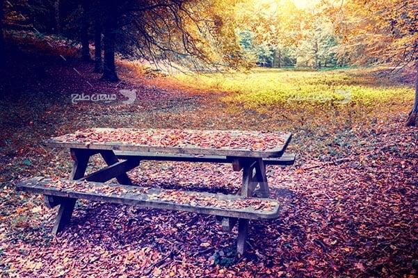 عکس تبلیغاتی طبیعت نیمکت پاییزی