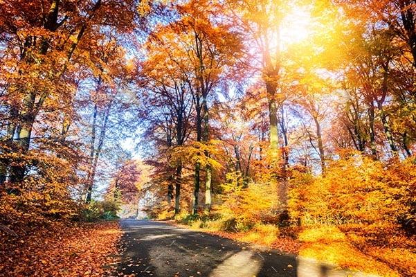 عکس تبلیغاتی طبیعت نور خورشید