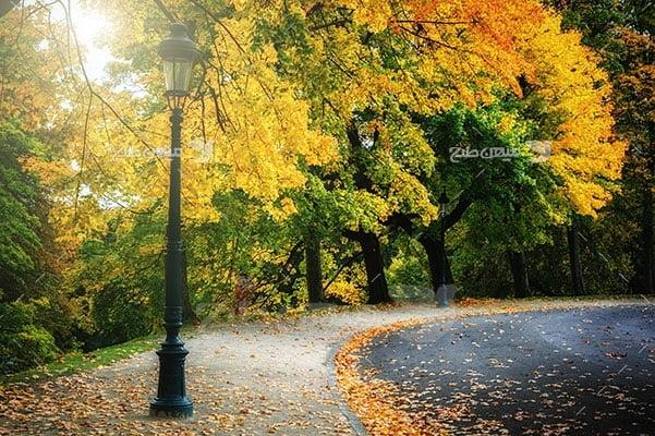 عکس تبلیغاتی طبیعت جاده زرد