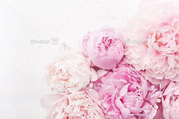 عکس گل پائونبا
