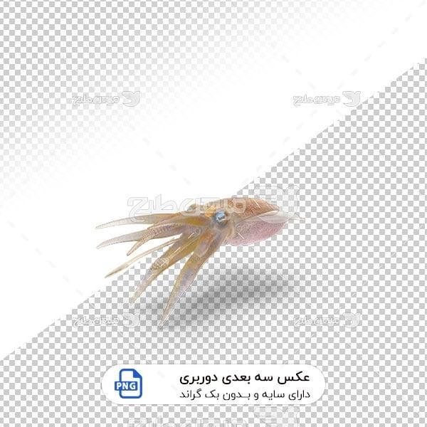 عکس برش خورده سه بعدی اختاپوس
