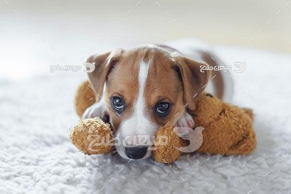 عکس تبلیغاتی سگ کوچک