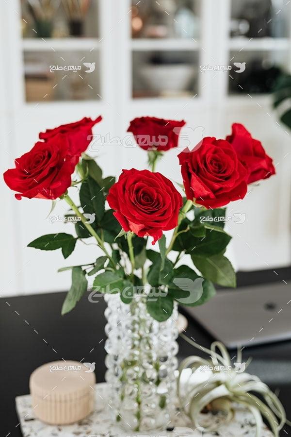 عکس شاخه گل رز قرمز در گلدان شیشه ای
