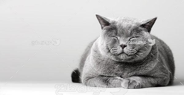 عکس تبلیغاتی گربه سیاه
