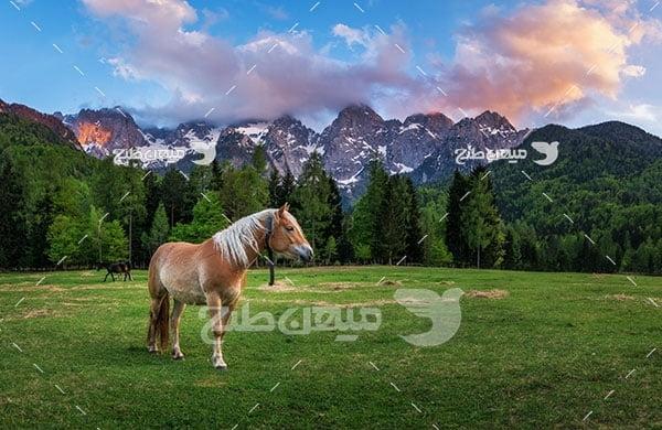 عکس تبلیغاتی اسب مزرعه
