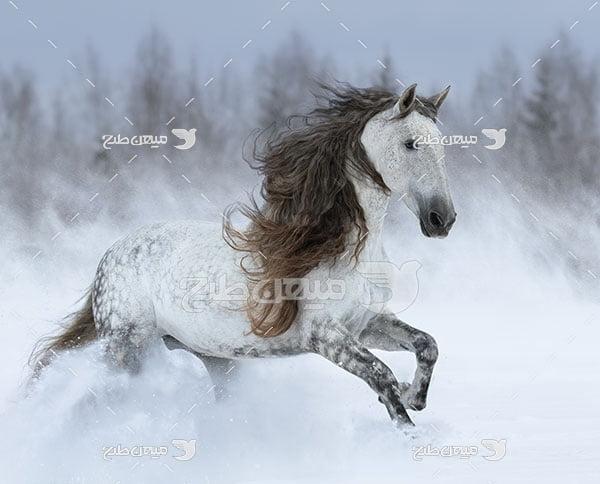 عکس تبلیغاتی اسب وحشی