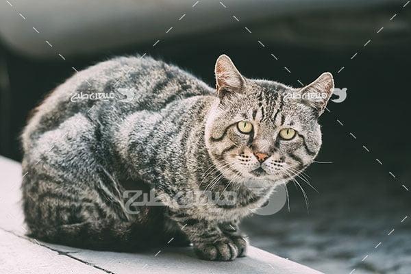 عکس تبلیغاتی گربه ملوس