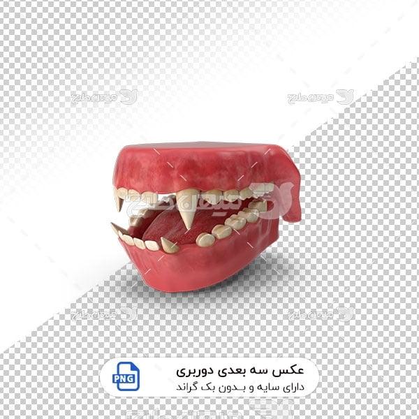 عکس برش خورده سه بعدی دندان میمون