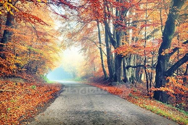 عکس تبلیغاتی طبیعت جاده پاییزی