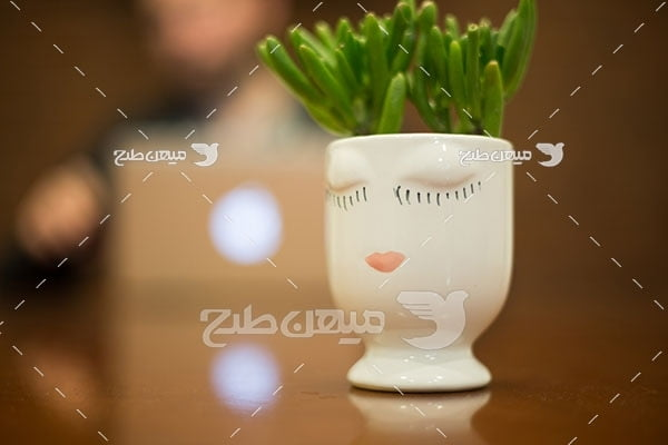 عکس گلدان گیاه خانگی
