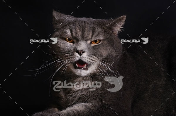 عکس تبلیغاتی گربه
