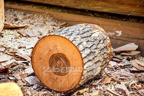 عکس کنده درخت