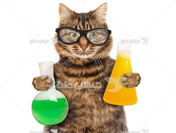 عکس گربه دانشمند