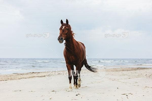 عکس تبلیغاتی اسب