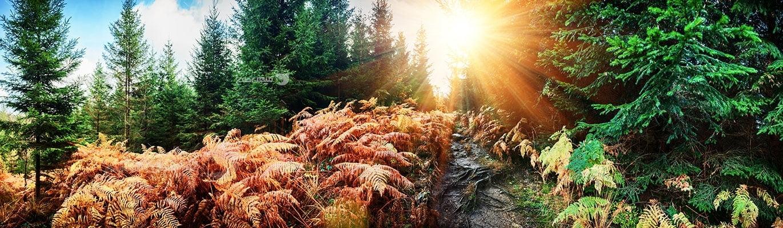 عکس تبلیغاتی طبیعت بهار و پاییز