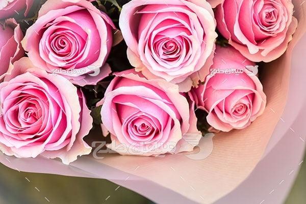 عکس یک دسته گل رز صورتی