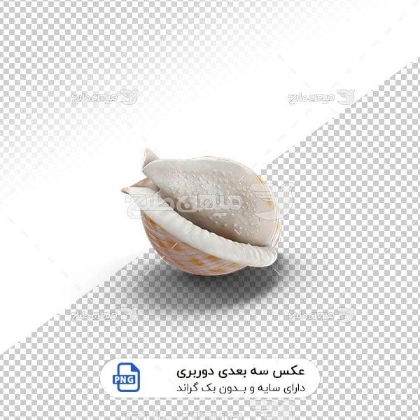 عکس برش خورده سه بعدی صدف دریایی