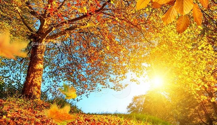 عکس تبلیغاتی طبیعت پاییز برگ ریزون