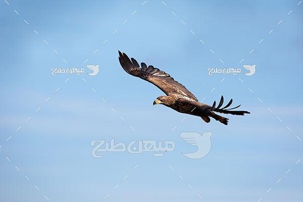 عکس تبلیغاتی عقاب