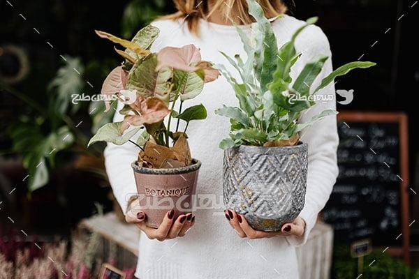 عکس گیاهان آپارتمانی
