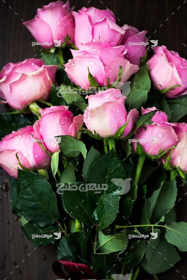 عکس شاخه گل های رز صورتی