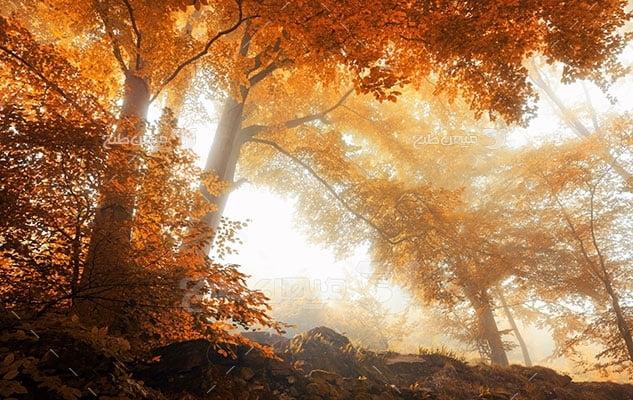 عکس تبلیغاتی طبیعت درختان نارنجی