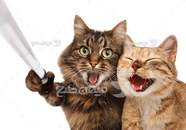 عکس دو گربه جنگ جو
