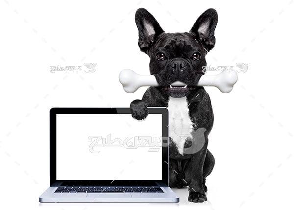 عکس سگ سیاه
