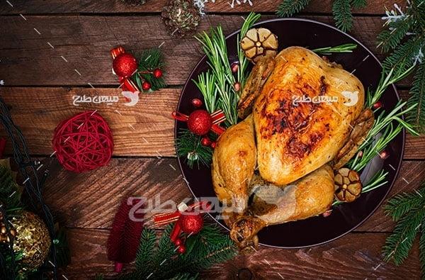 عکس مرغ شکم پر
