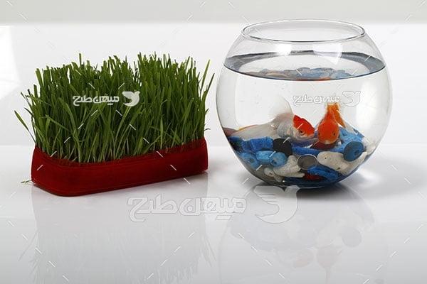 عکس ماهی و سبزه عید