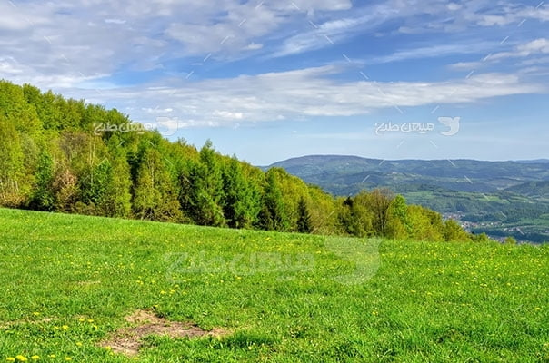 عکس تبلیغاتی طبیعت سبز