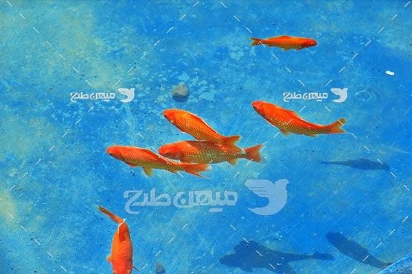 عکس حوض ماهی خانه عرب شهر یزد