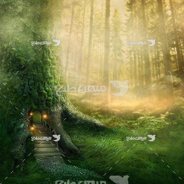 عکس خانه در تنه درخت