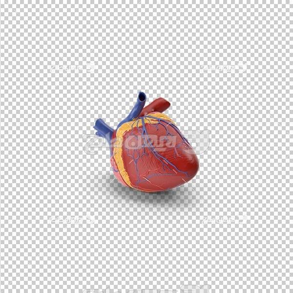 تصویر دوربری سه بعدی قلب انسان