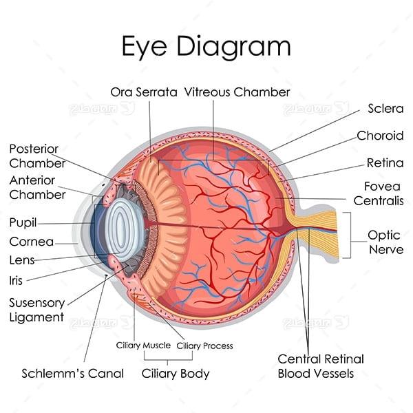 طرح وکتور با موضوع پزشکی - چشم