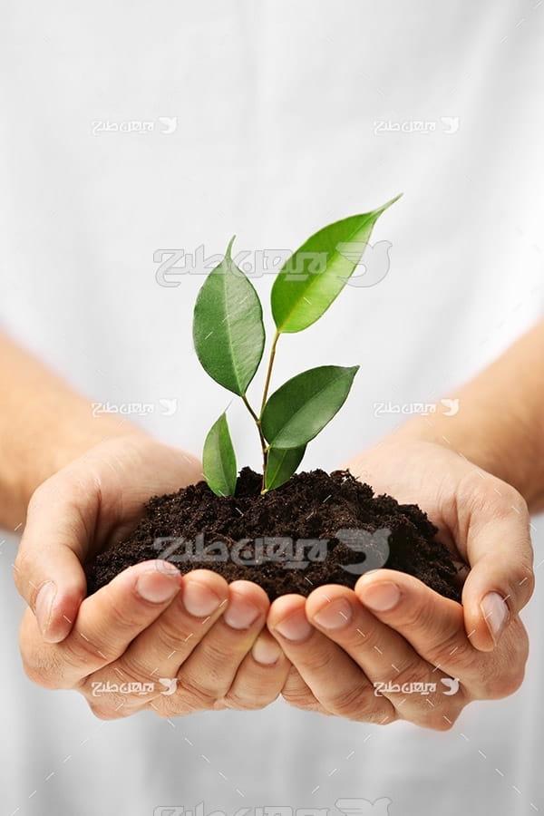 خاک،گیاه،دست،اسنان