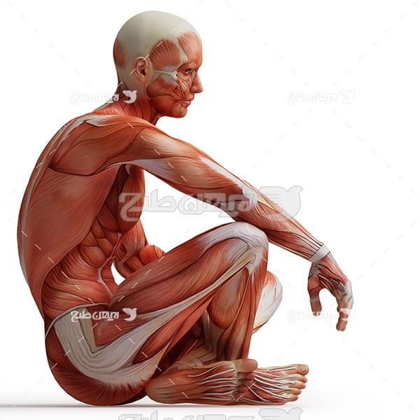 بدن انسان در حالت نشسته