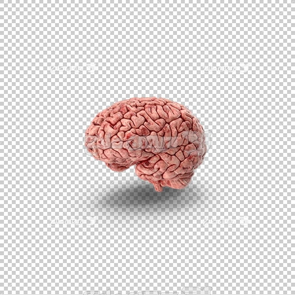 تصویر سه بعدی دوربری مغز