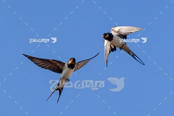 تصویر پرنده