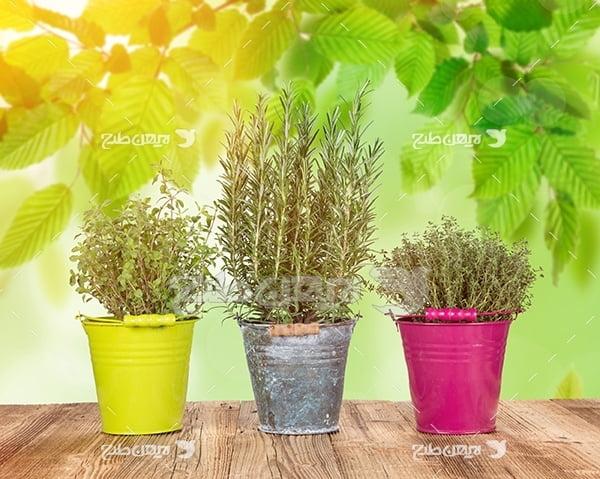 عکس گیاه با گلدان های رنگی