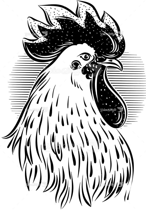 وکتور خروس