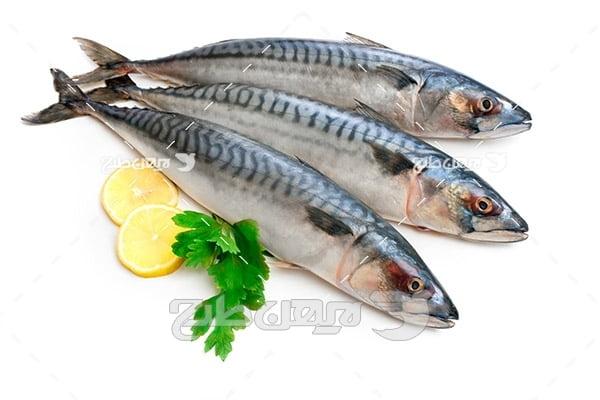 عکس ماهی،گوشت ماهی و لیمو
